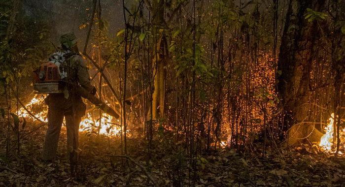 Pantanal in fiamme, distrutto 15% dell'intero bioma