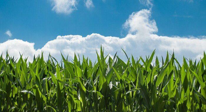 Revoca dei prodotti fitosanitari contenenti la sostanza attiva mancozeb