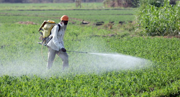 Svizzera:sondaggio, respinto referendum su divieto pesticidi