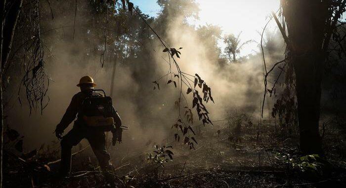Ora l'Amazzonia produce più Co2 di quanta ne assorbe